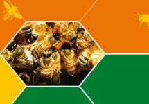 Eröffnung Bienenwagen